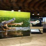 Wunder der Natur – eindrucksvolle Ausstellung im Gasometer Oberhausen
